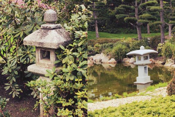 桜 / 벚나무 / sakura