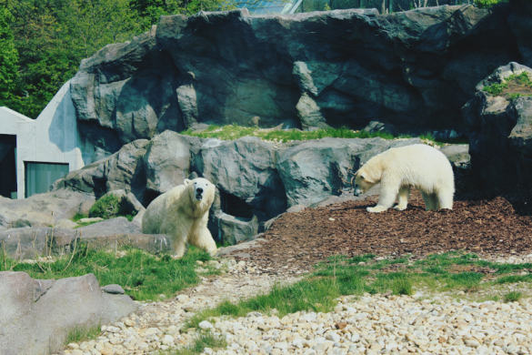 Zoo Schönbrunn Teil 1
