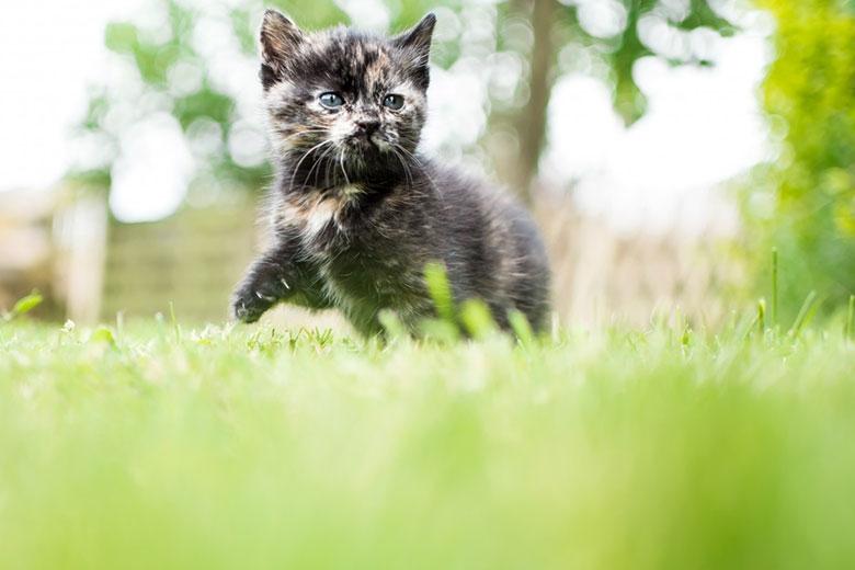 Basics-zur-Katzenhaltung