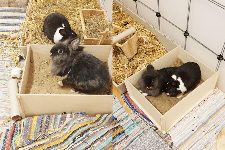 Kaninchen-Buddelbox