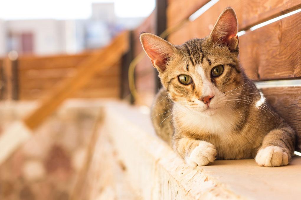 Katzen-Freigänger-was-beachten
