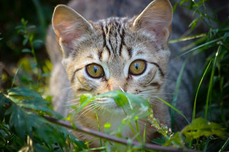 Tierschutz-sofort